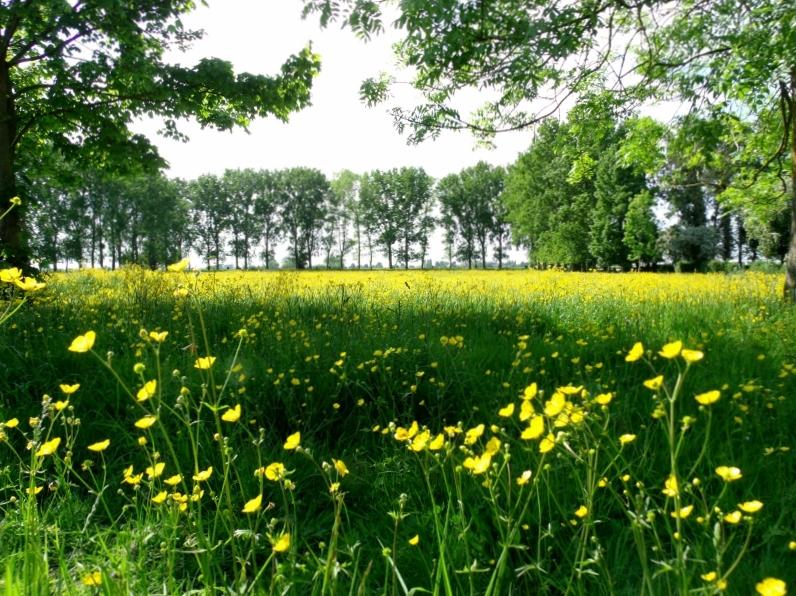 Meadow next to Abbey Ardenne