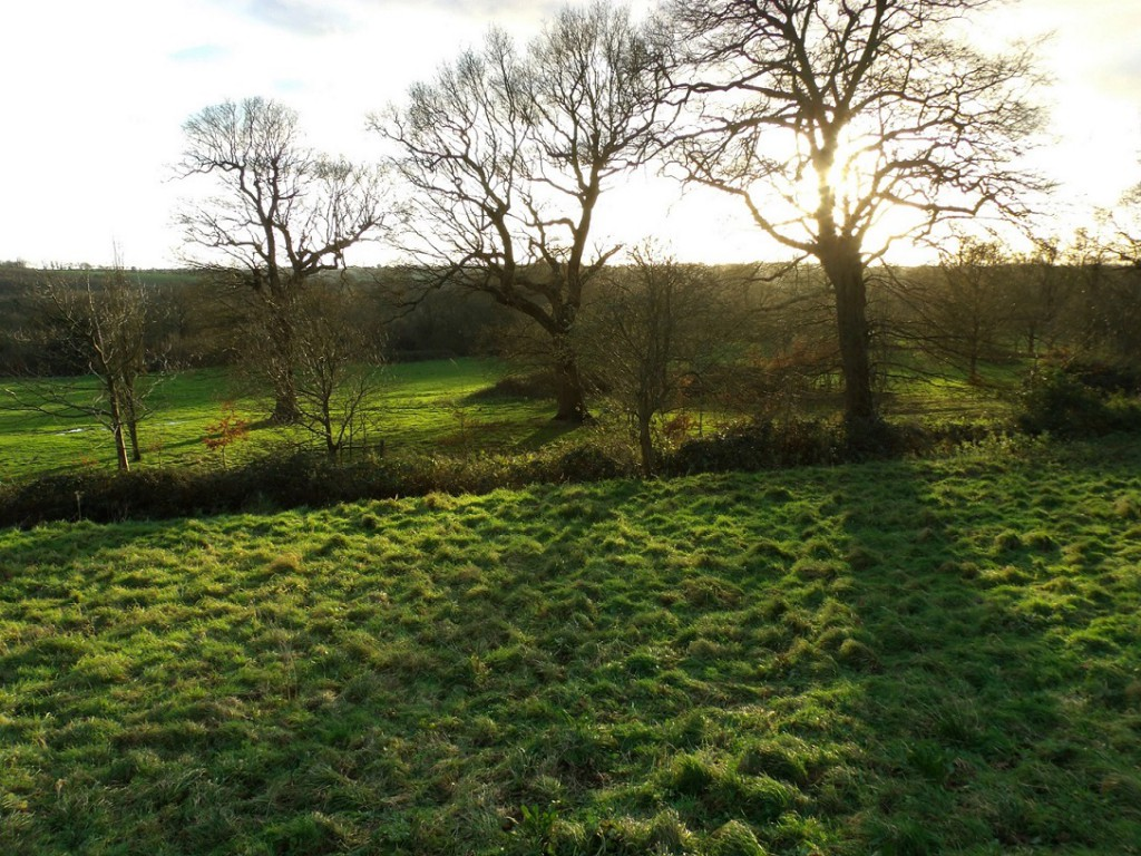 Senlac fields