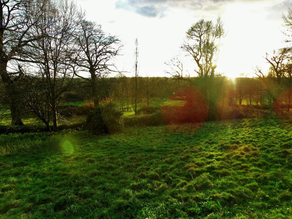 Senlac fields on a winter evening