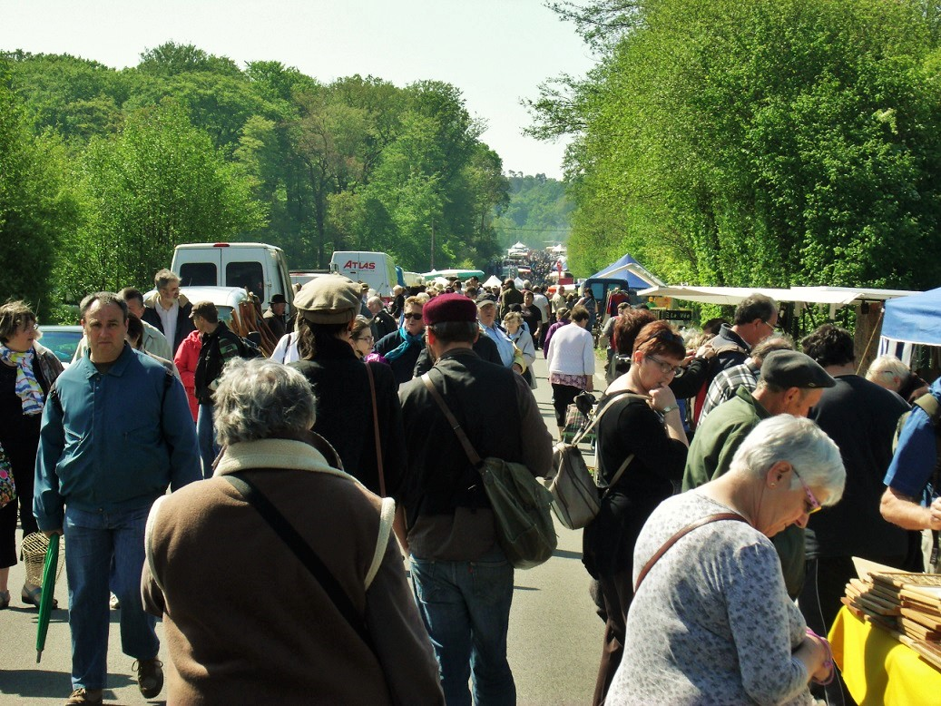 View of Les Andaines forest brocante