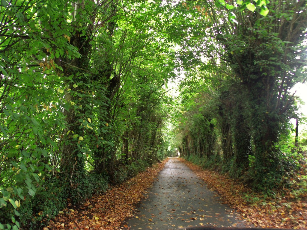 Lane to When you are granted three wishes, after world peace and the end to all disease, the third wish is of course for a Normandy chateau. We think we may have found exactly the one to wish for, hidden at the end of ancient lane edged with trees that form a green tunnel.