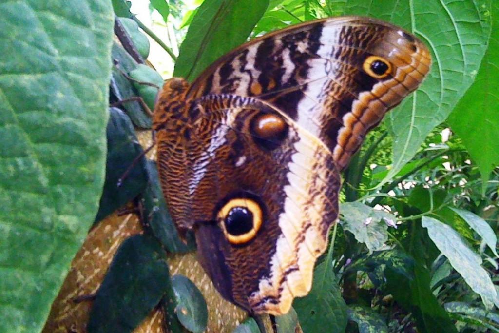 BIG butterflies at Naturospace, nr Honfleur