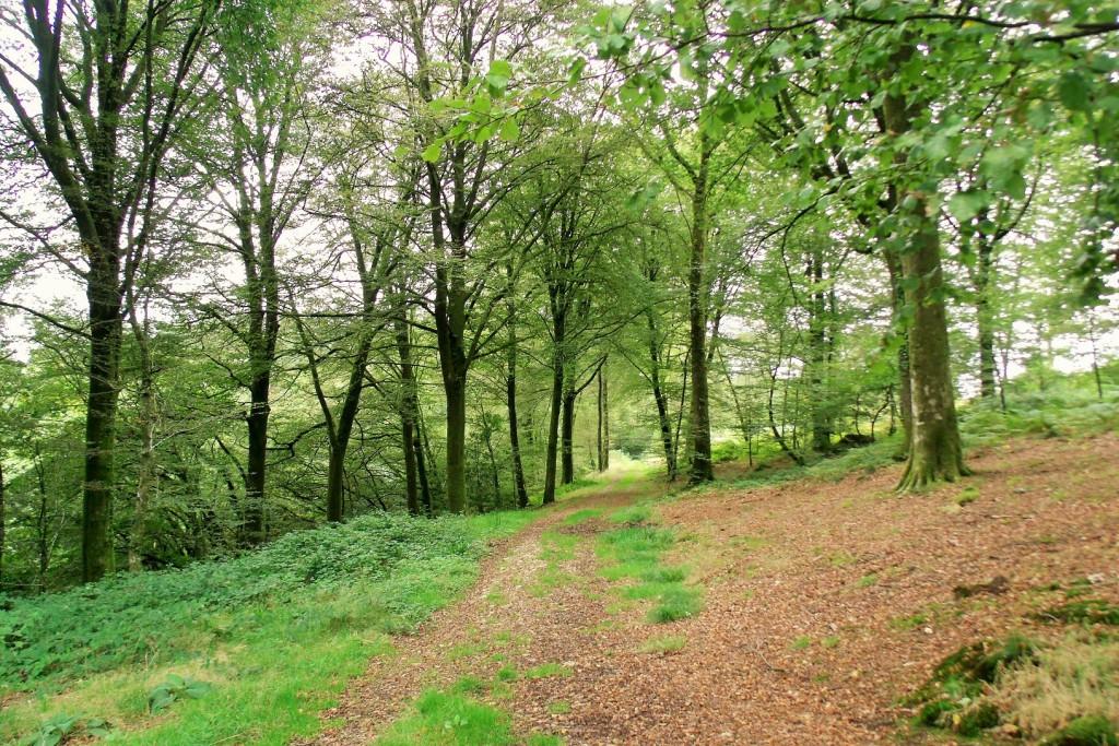 Forest of Saint-Sever Calvados