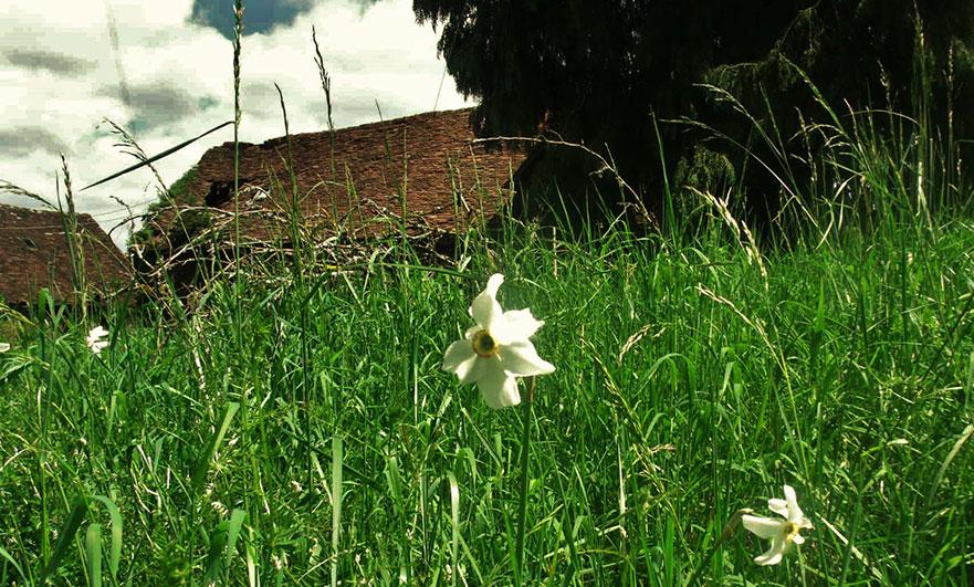 Signs of a long forgotten garden