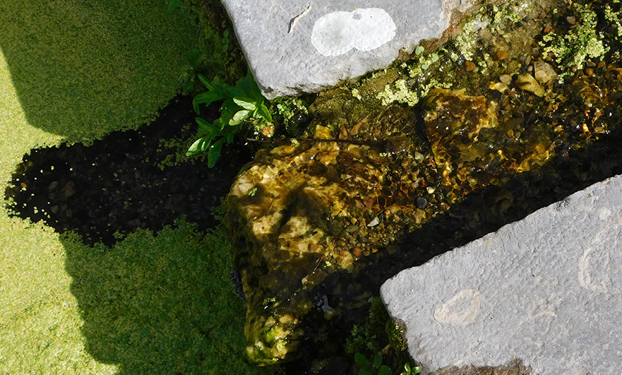 Beautifully clear water from Saint Helier's Fountain