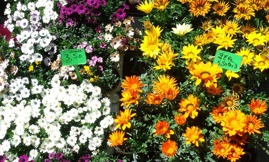 flowers-foire-des-andaines