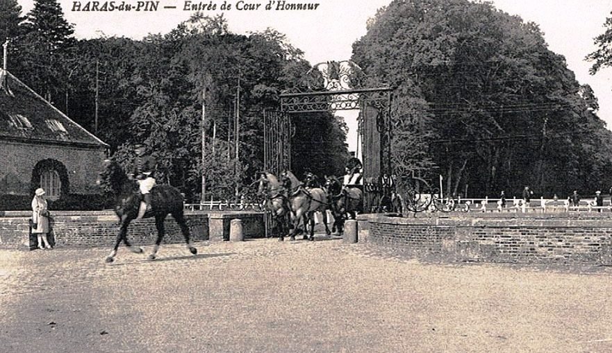 Cheval And A Show At Haras Du Pin