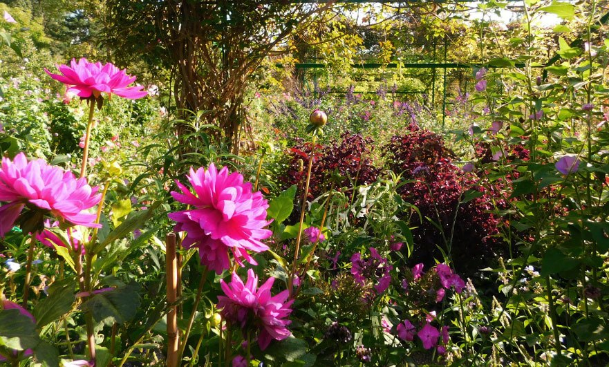Dahlias in the clos Normand, September 2017
